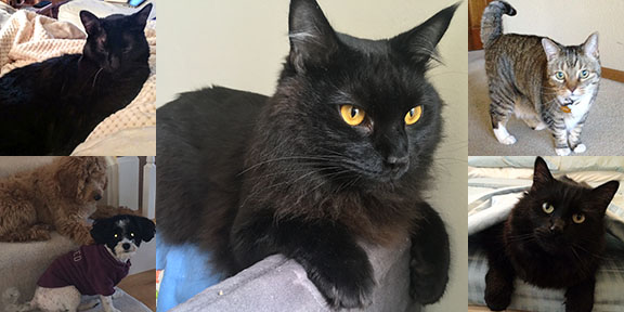 Originally from Stockton, Calif, 2-year-old Phineas now makes his home in San Francisco's sunny Bernal Heights neighborhood. He enjoys checking to see who's at the door, jumping, and elastics of all kinds.