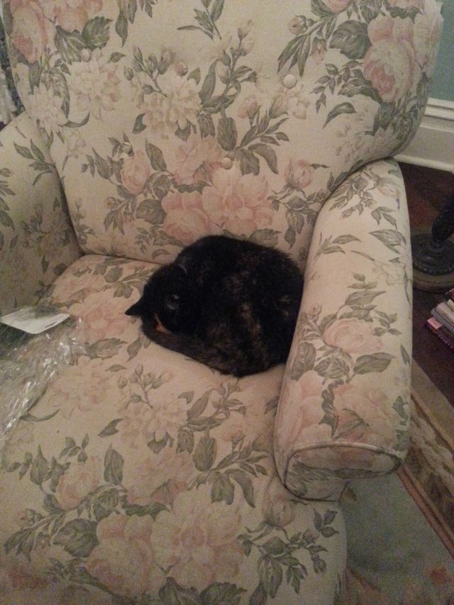 Reyna curled up on the sofa