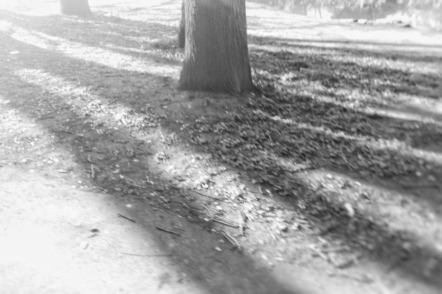 A tree trunk amid faded shadows, all in monochrome