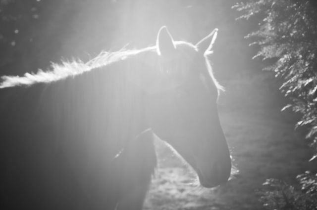 A horse's head, silhouetted, sprinkled with sunlight.
