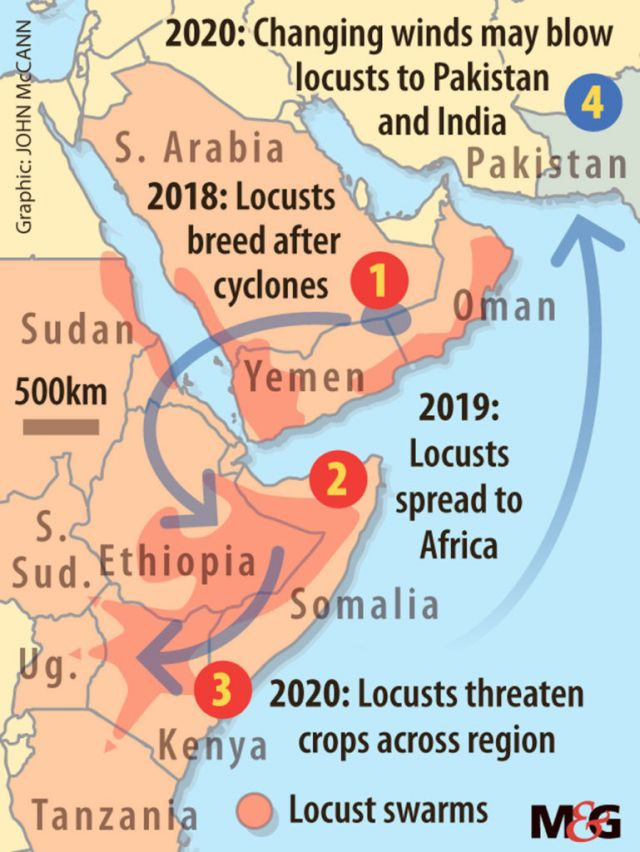 A map showing that the locusts starting in Saudi Arabia and spread into East Africa