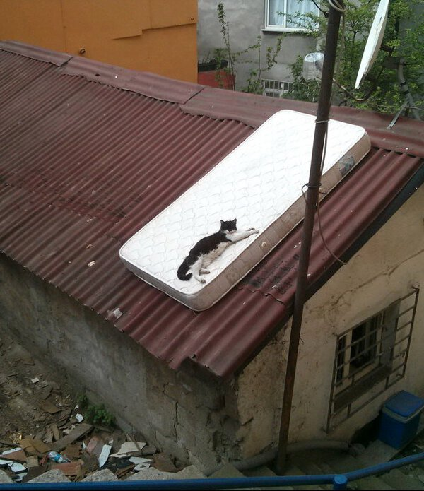 A black cat is lying relaxed on a single bed mattress, which is laying on a roof, outdoors