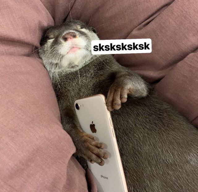 A content otter holding a phone with the caption sksksk