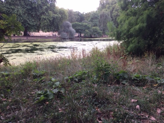 It might not look very glamorous but this roughage in St James park is fantastic for wildlife