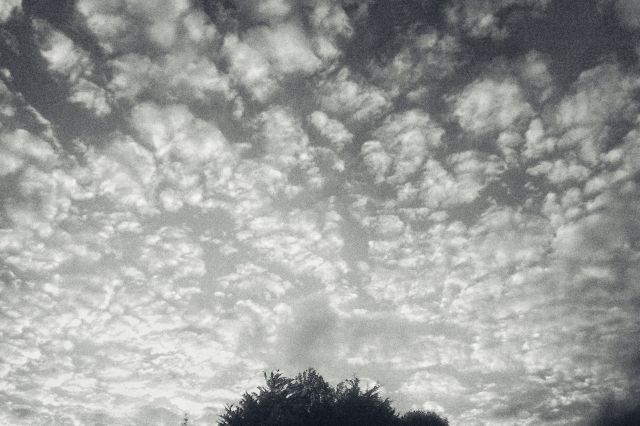 Spotted clouds above the top branches of a tree