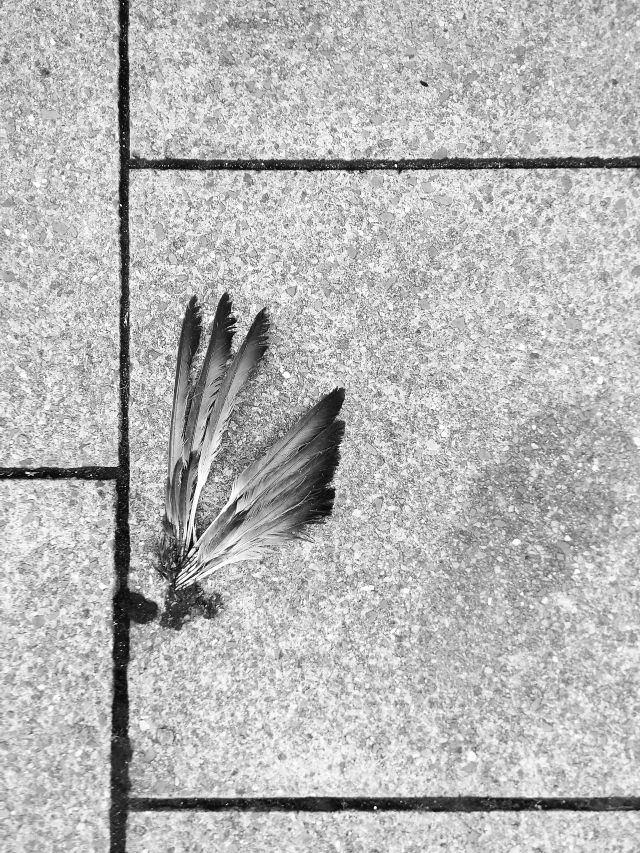 Bird feathers, left behind on a pavement somewhere.