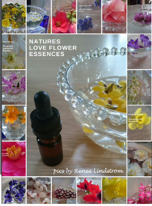 Natures Love Flower Essences