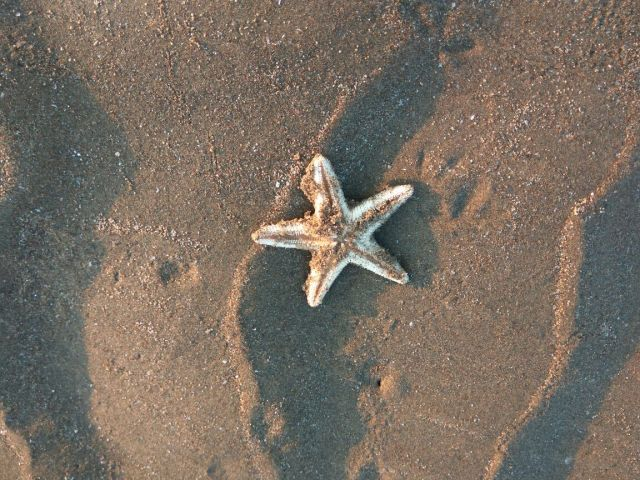 There is a star fish on the sand with the sunlight falling on it, like around sunset.